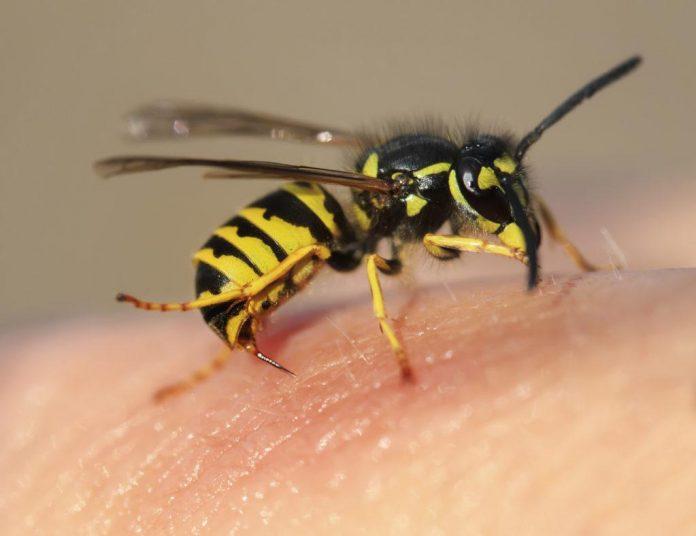 Cách trị ong đốt