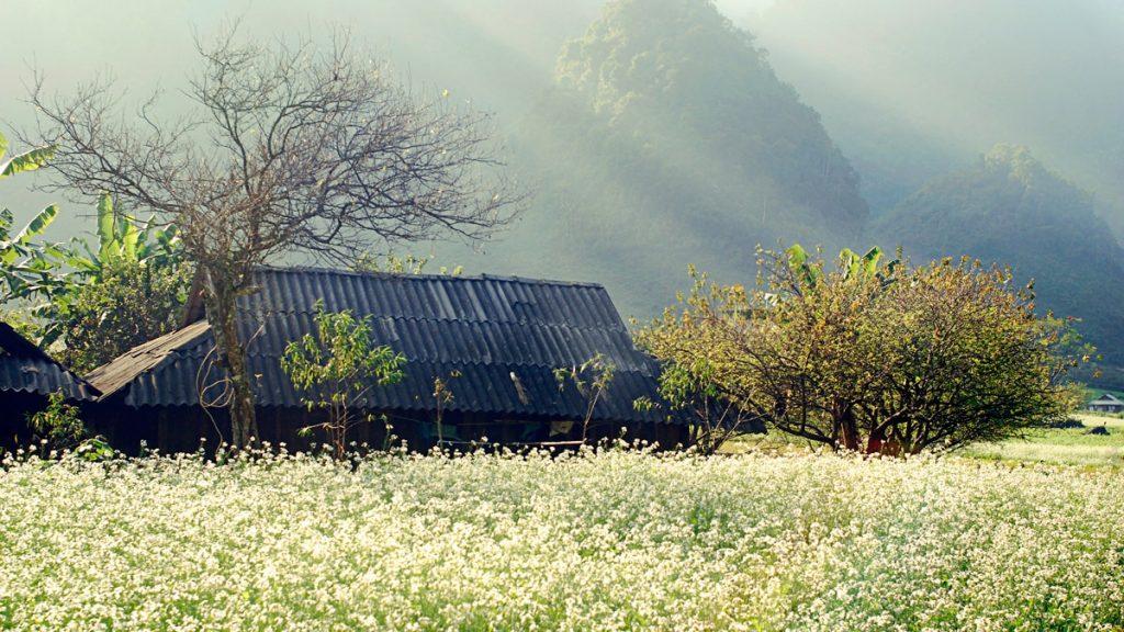 cảnh đẹp Mộc Châu